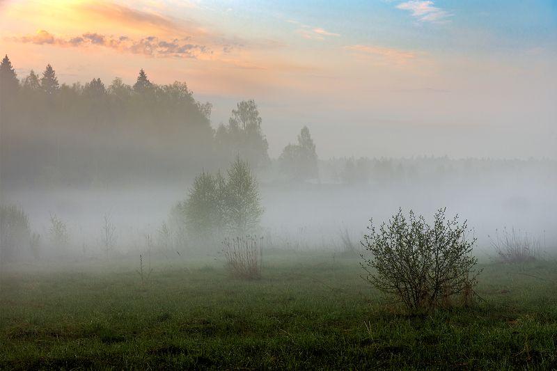 Нежное утро.photo preview