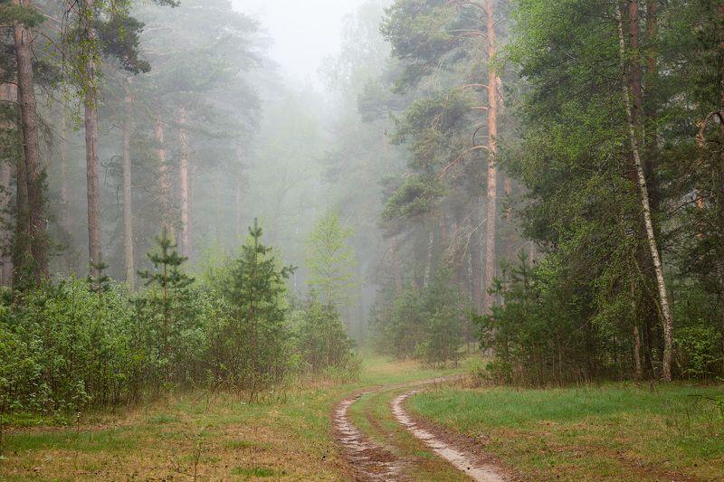 утро туман  лес дорога Туманное утроphoto preview