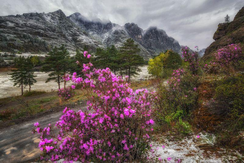 горный алтай,чемальский тракт,катунь,май,непогода,снег,маральник Весенний  снег...photo preview