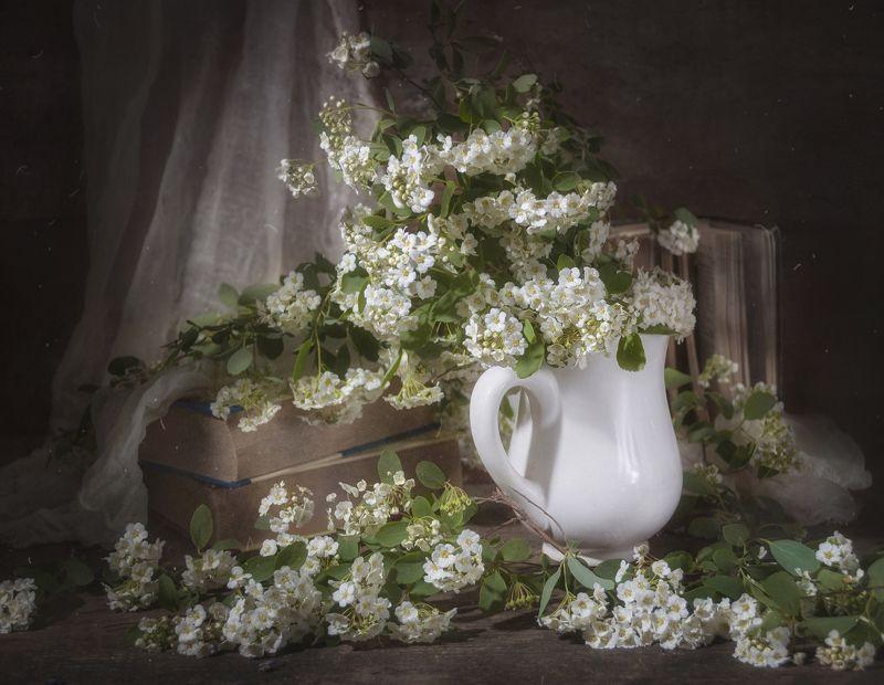 спирея,цветение,весна,текстура,тёмный,кружка,книги,цветы,белый Цветёт Спиреяphoto preview