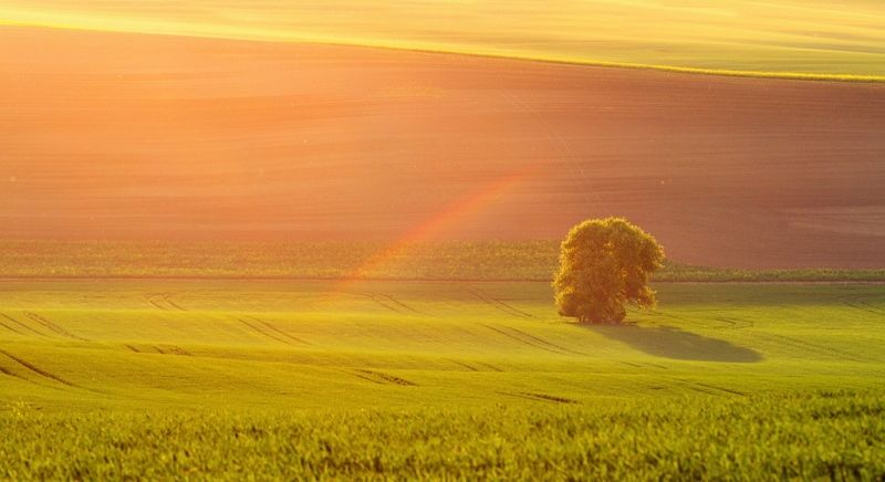Old pear tree with a rainbow :-)photo preview