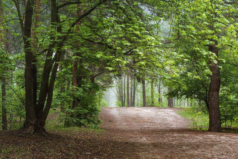 лес весна май туман Вдали от шума городскогоphoto preview