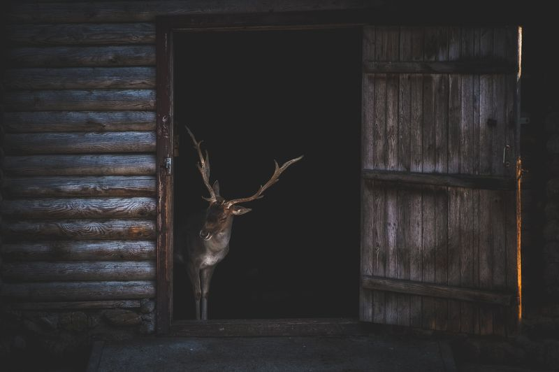 Deer at Homephoto preview