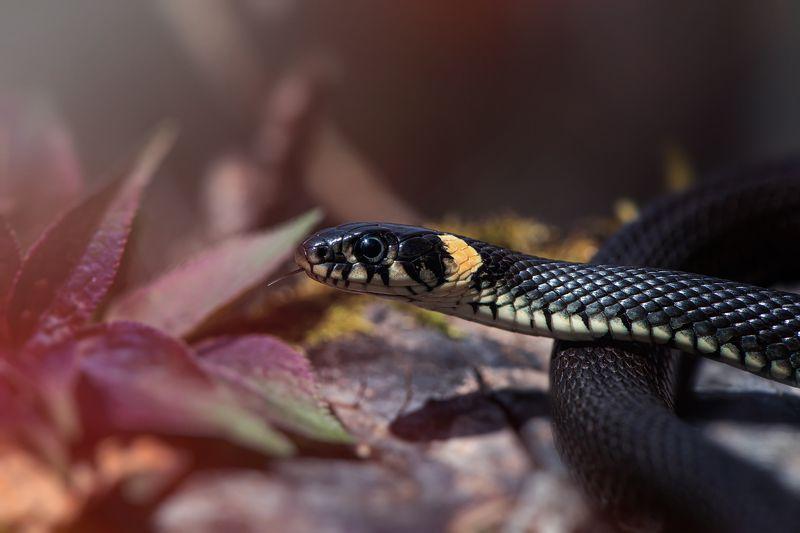 змея уж весна природа лес Ужжжжжжphoto preview