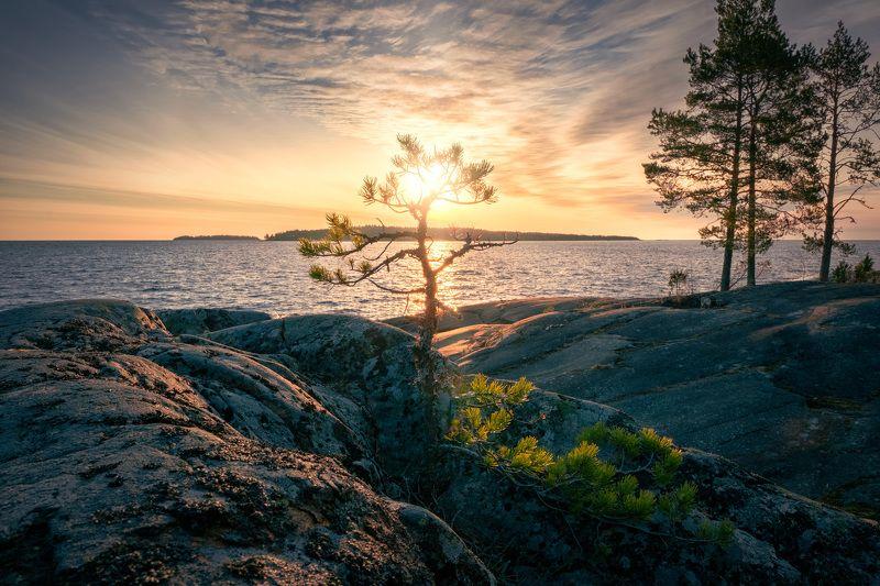 ладога, скалы, рассвет, сосна, деревья, облака, холод, пейзаж, природа Сосны на скалахphoto preview