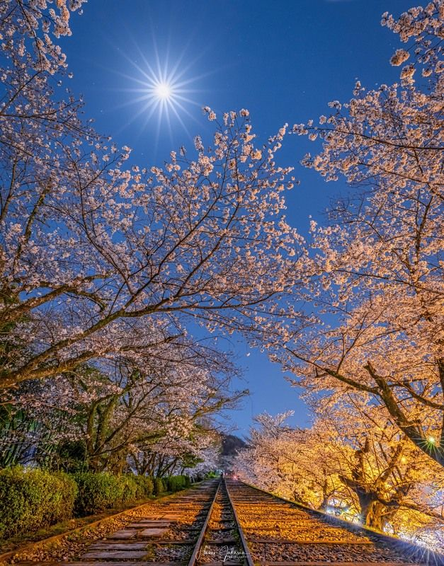 #kyoto #japan #cherryblossoms #moon [ Cherry  Blossoms ]photo preview