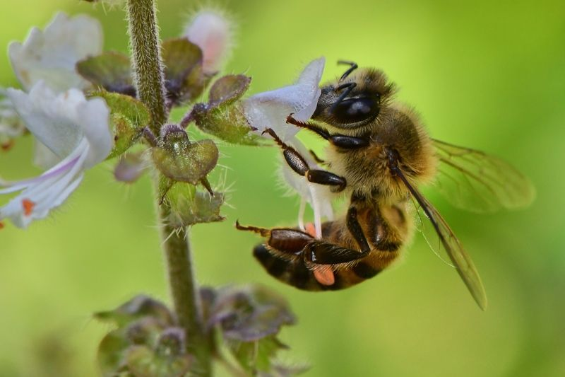 abelha, denis moura, mogi das cruzes, brasil, bee Save the beesphoto preview