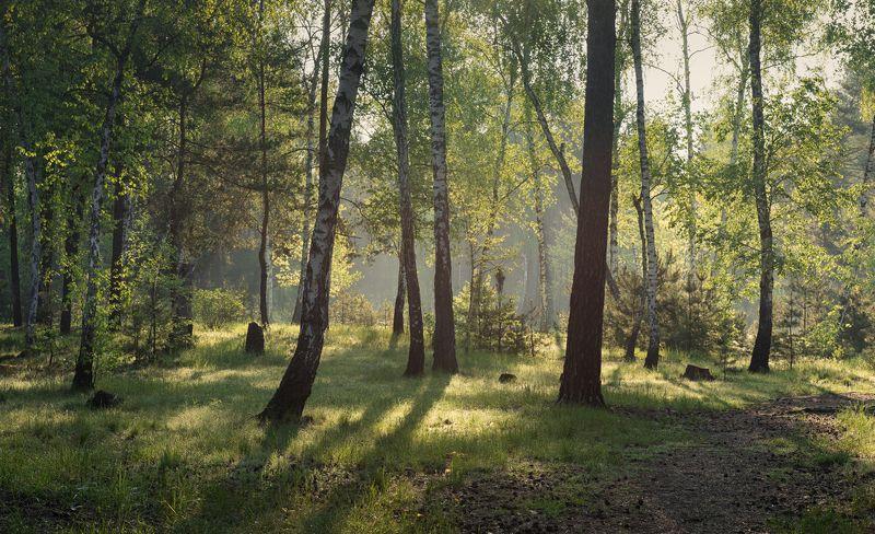 лес весна май туман Вдали от городской суетыphoto preview