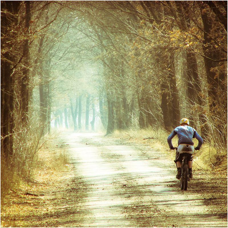 васильков вело велоспорт велосипед тоннель лес деревья Прогулочнаяphoto preview