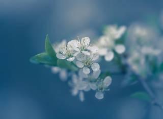 Ситцевая весна