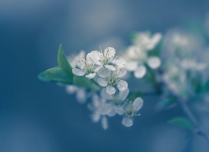 Ситцевая веснаphoto preview