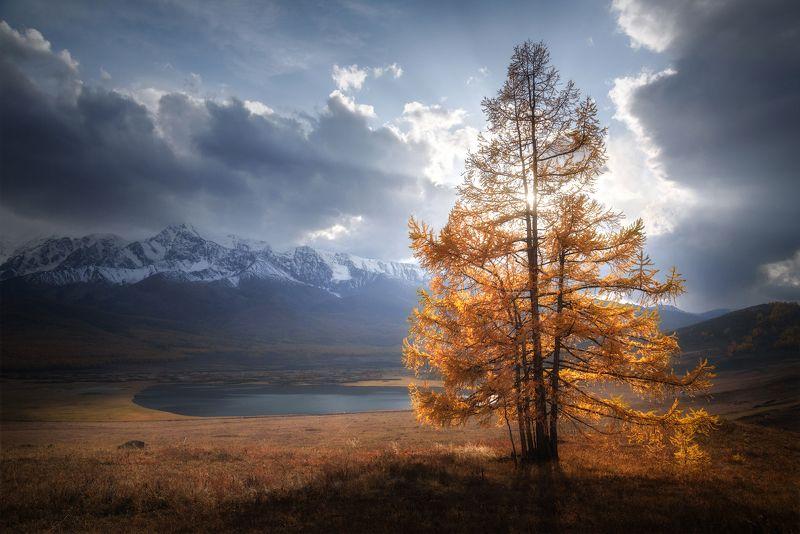 алтай, горный алтай, горы, курайская степь, урочище ештыкель, лиственницы, лиственница, золотая осень, гроза, сентябрь, altai mountains В единстве - силаphoto preview