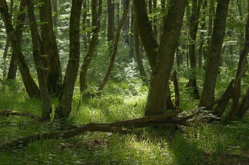 лес весна утро Был месяц майphoto preview