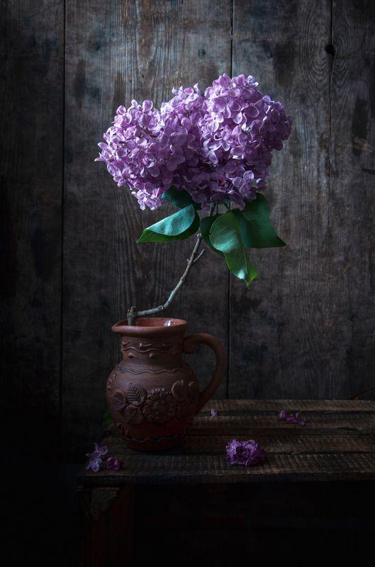 весна, сирень, натюрморт, аромат, сиреневый, май Время сирениphoto preview