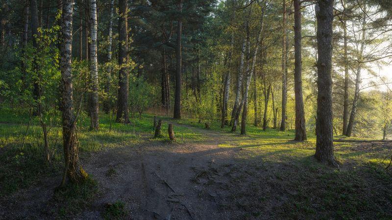 природа, закат, лес, весна, Московская область, пейзаж Закат в лесуphoto preview