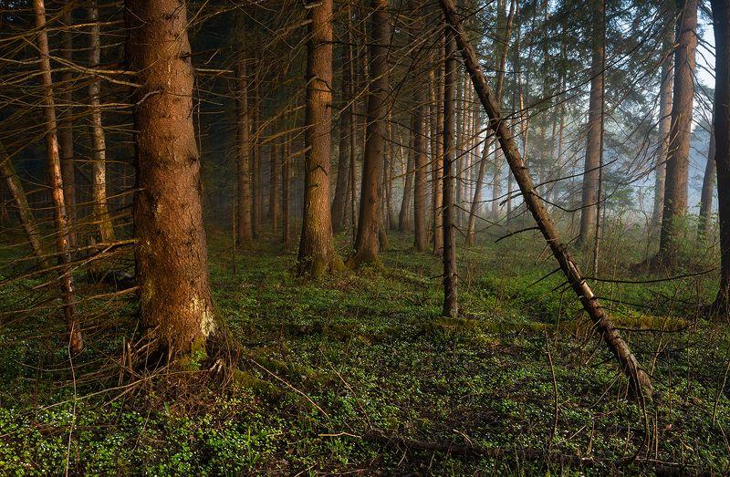 В старом лесу.photo preview
