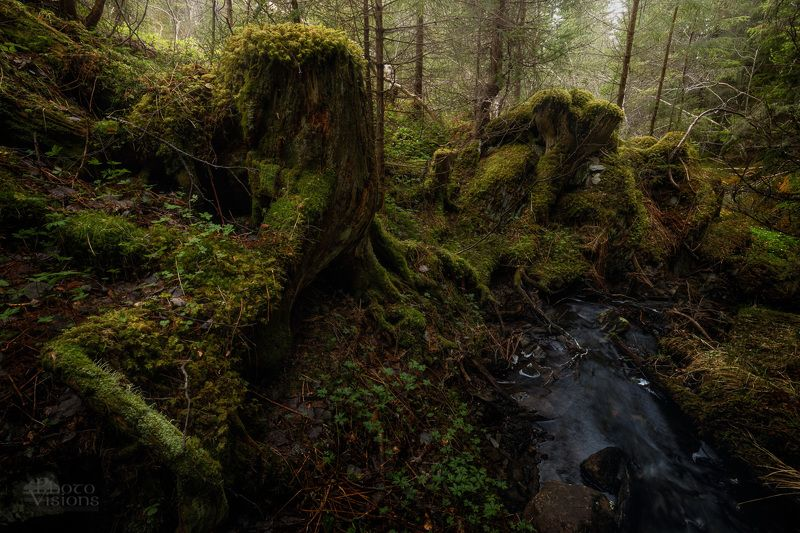 forest,woodlands,norway,spring,tree,trees,woods Old Entsphoto preview