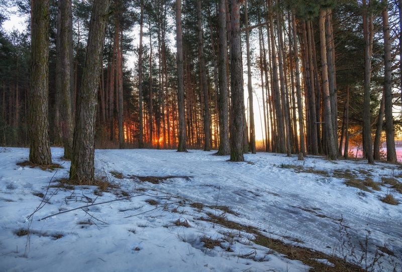 рассвет, лес, зима, Утром в лесуphoto preview