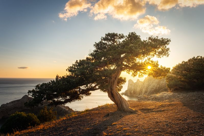закат, крым, юбк, черное море, новый свет, осень Танцуя с Солнцемphoto preview