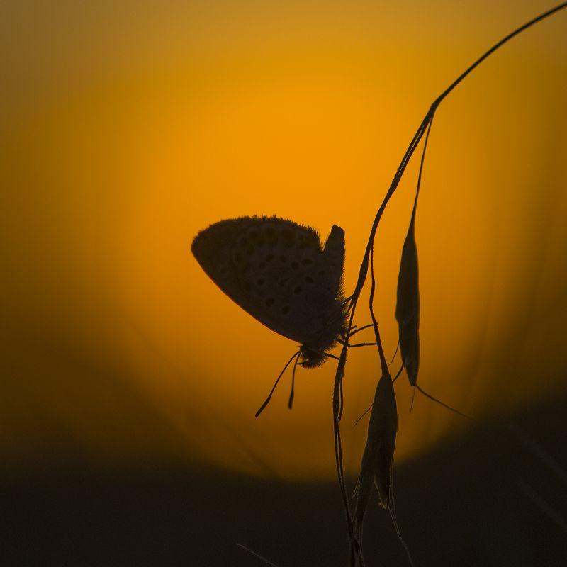 В закатном солнышкеphoto preview