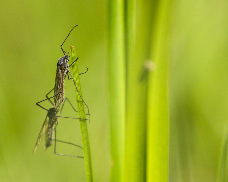макро, насекомые,трава, весна Не комарphoto preview