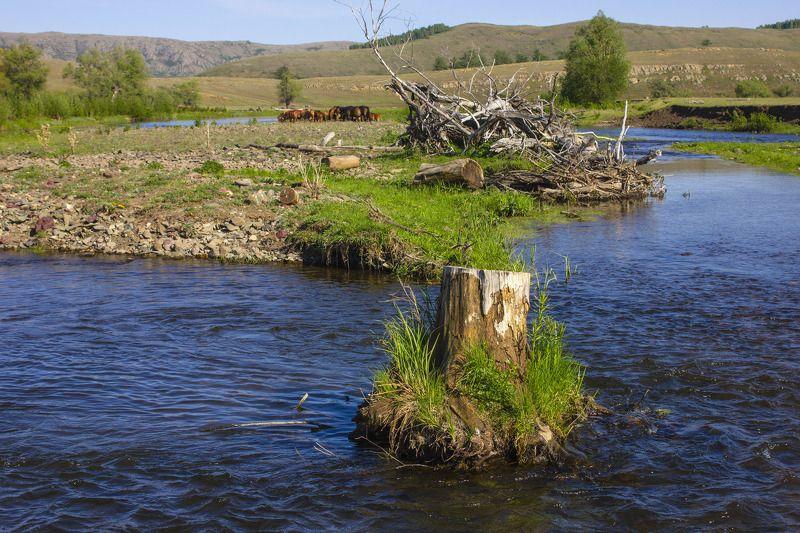 природа, весна,пейзаж, пень, река, лошади, небо, южный урал, Старый пеньphoto preview