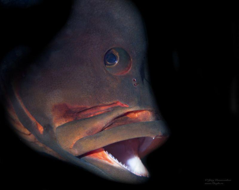 подводное фото подводный мир хургада египет жогло zhoglo красное море Портрет фото превью