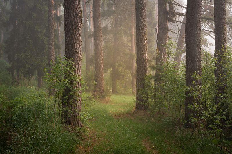 Утро в туманном лесуphoto preview