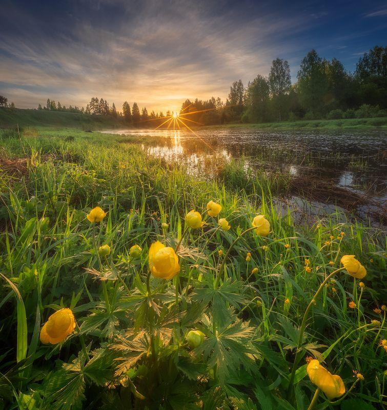 весна, река, цветы, восход ***photo preview