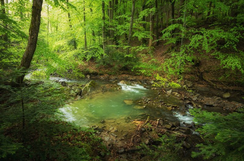 fores, fog, morning, spring, landscape Forest in the rainphoto preview