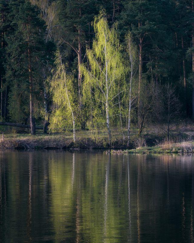 природа, пейзаж, деревья, утро, рассвет, московская область, природа московской области ***photo preview