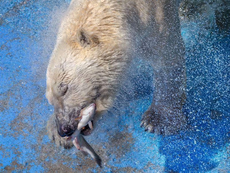 белый медведь Белый медведьphoto preview