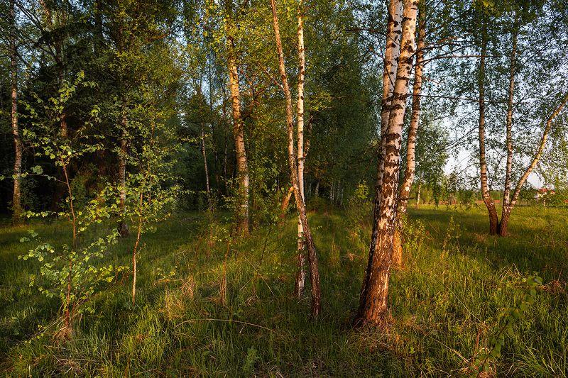 Закатная кутерьма.photo preview