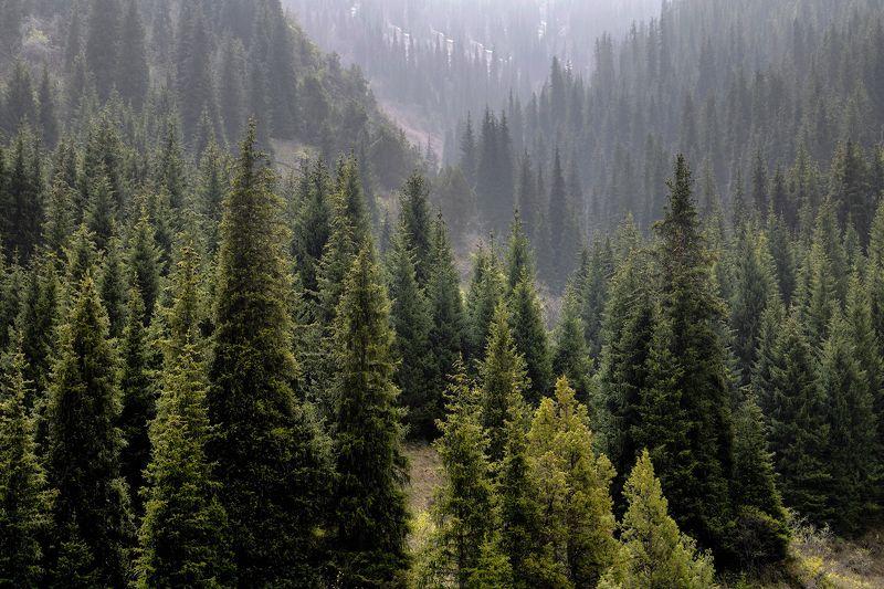кыргызстан, горы Елкина жизньphoto preview