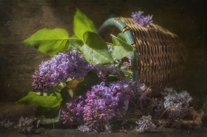 корзина,весна, ветка сирени,дерево,пыль,цветение,ароматная Ветка Сирениphoto preview