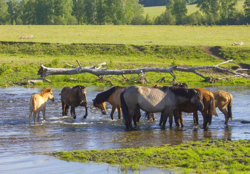 природа, животные, домашние животные, лошади Жараphoto preview