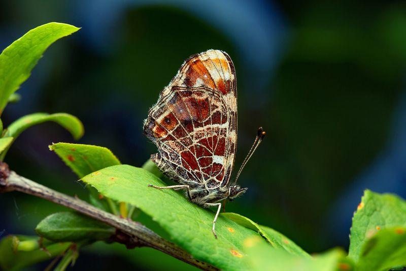 макро бабочка макрофото вечер насекомые природа Бабочка на закатеphoto preview