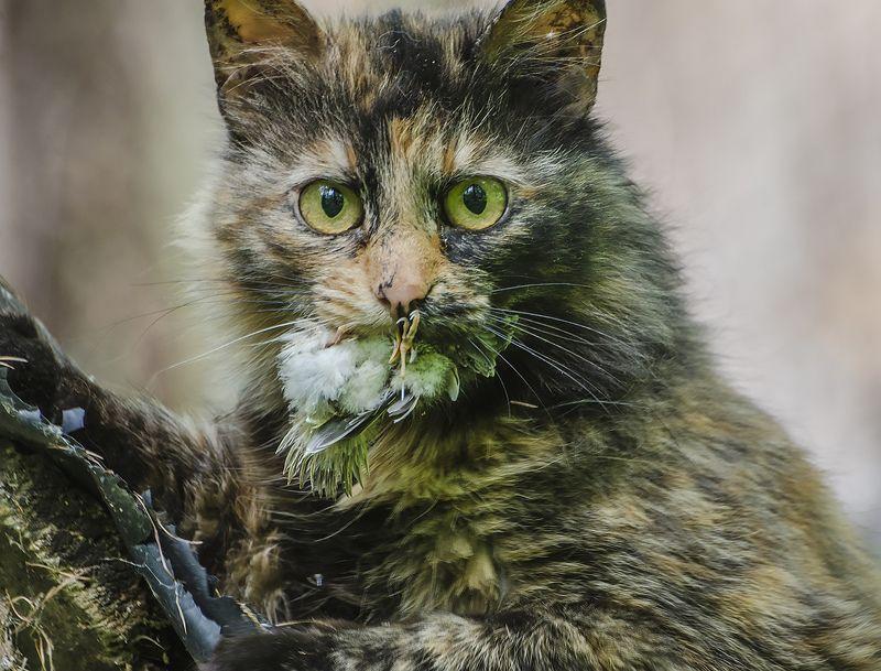кошка, охотник Инстинкт охотникаphoto preview