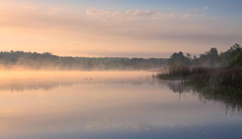 лето, река, рассвет, туман, В долине тумановphoto preview