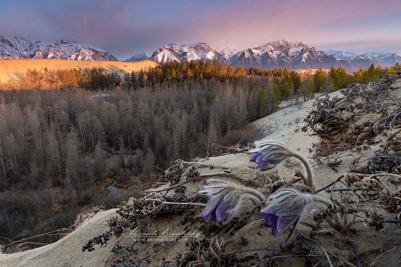 забайкалье, кодар, чарские пески, kodar, chara ~ На краю ~photo preview