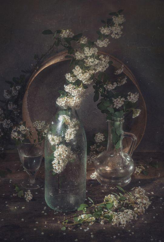 весна,стекло,сосуды,спирея,тёмный,решето,грусть Уходит весна...photo preview