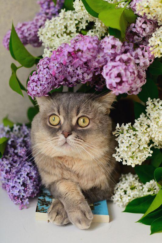 Весенний котикphoto preview