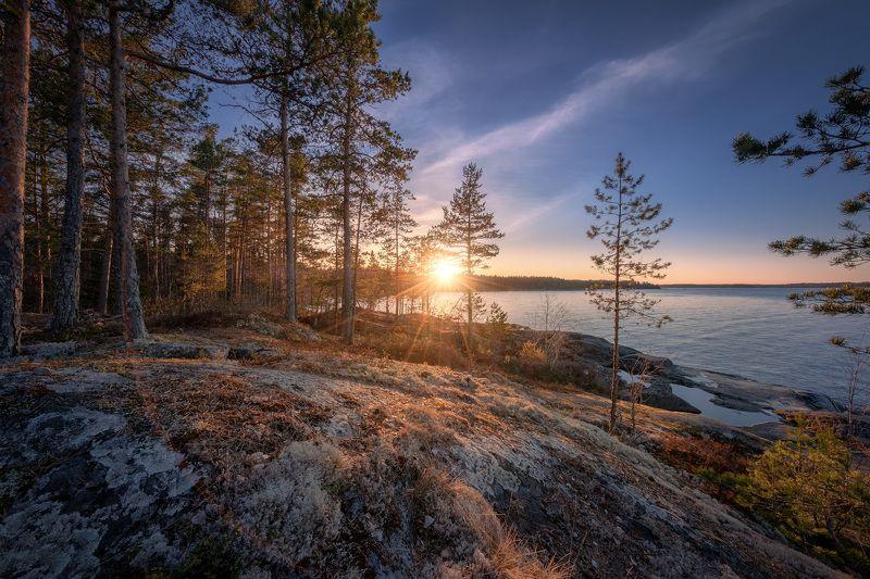 карелия, ладога, скалы, деревья, мох, лишайник, закат, облака, пейзаж, природа Ковер на скалахphoto preview