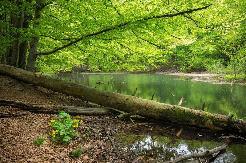 jeziorka duszatyńskie, bieszczady, spring, Jeziorka Duszatyńskiephoto preview