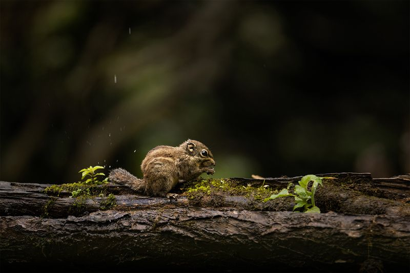 chipmunk, animals, wildlife, nature, cute A little hungryphoto preview