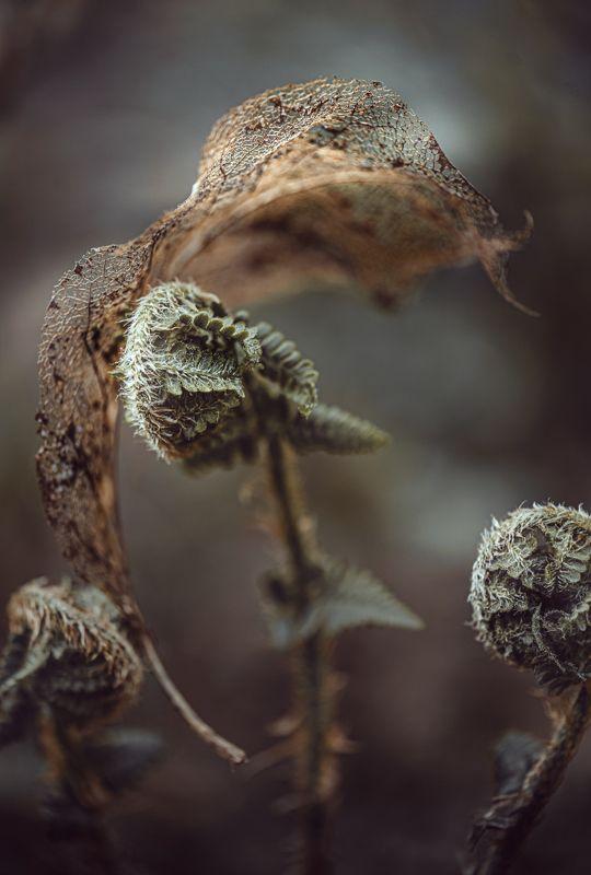 природа, макро, весна, папоротник, лист Ночевала тучка золотаяphoto preview