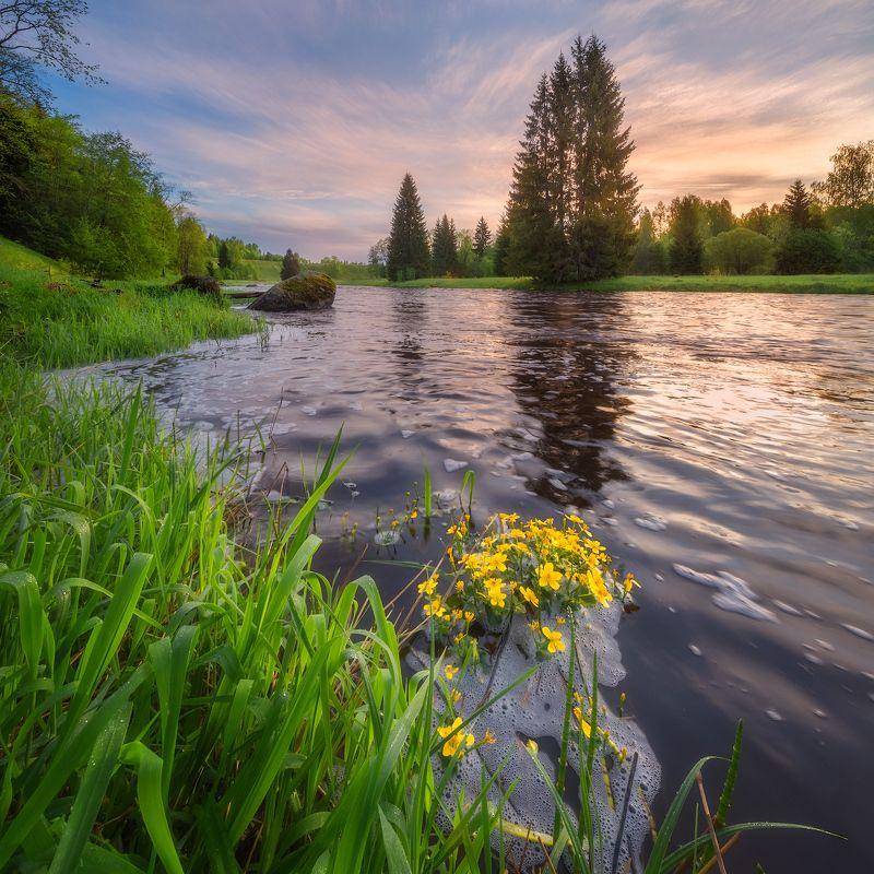 рассвет, река, ленобласть ***photo preview