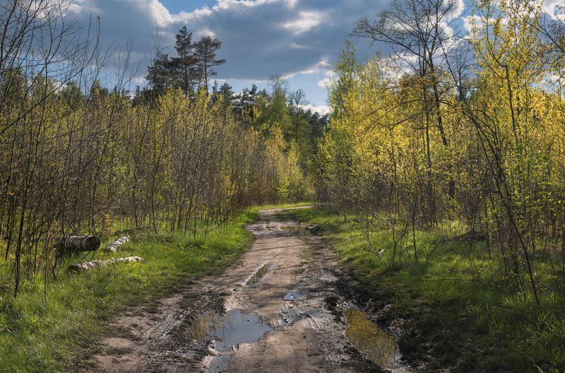 лес весна май Изумрудный вечерphoto preview
