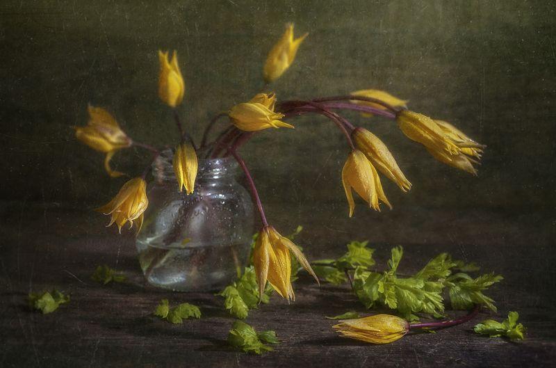 тюльпан,жёлтые,цветы,весна,текстурный,банка,дикие Фонарикиphoto preview