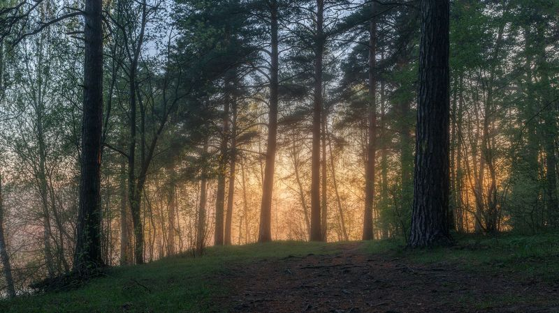 природа, туман, настроение, утро, весна, пейзаж, Московская область Туманное утроphoto preview